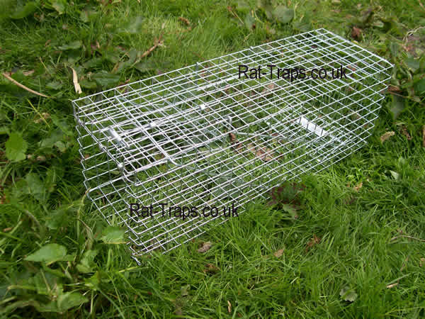 how to catch a wild rabbit without a trap