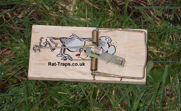 Kill Type Rat Traps Rat Traps Co Uk Suppliers Of Live